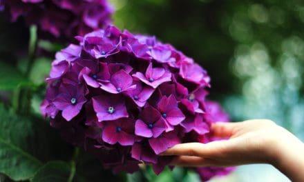 【シャイニージェル】七夕ネイルで夏のはじまり。