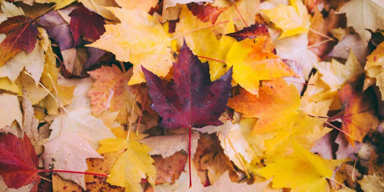 【福岡_CANON】師走、気温25℃越えの福岡から紅葉をお届けします _ONE DAY ONE SHOOTING !