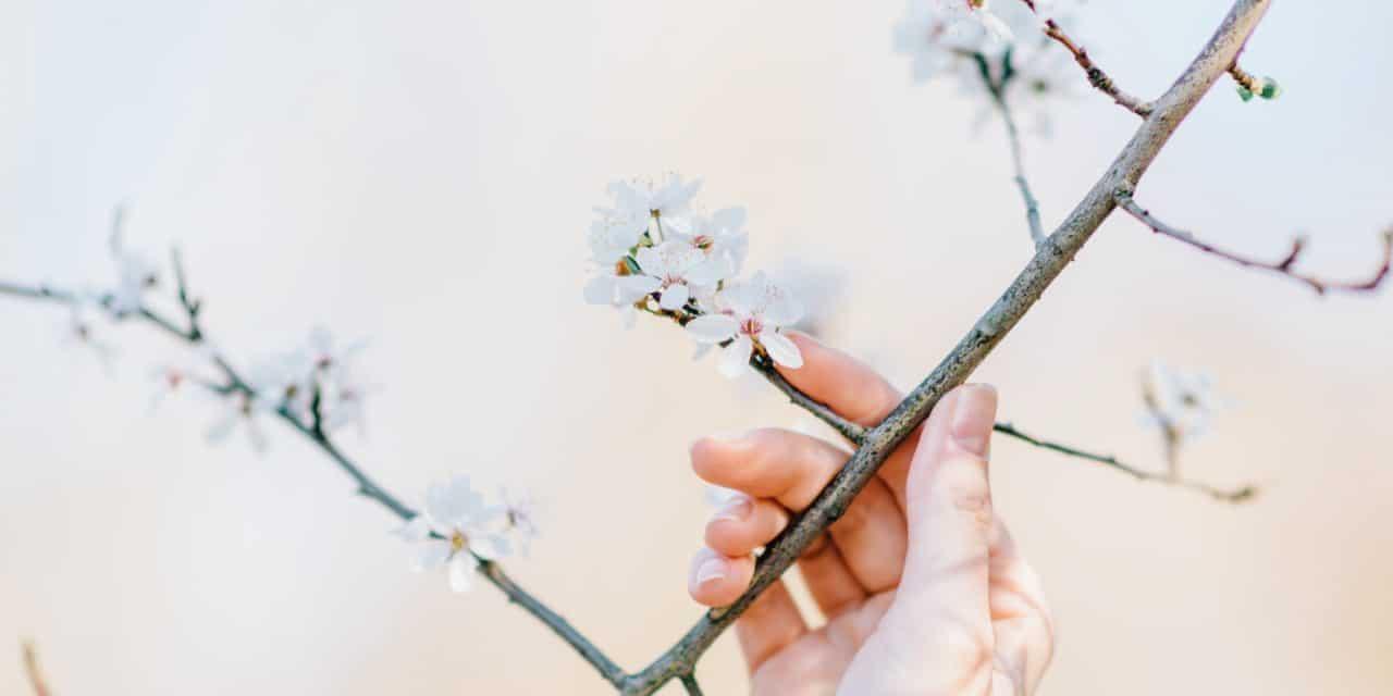 【シャイニージェル】春はすぐそこ。おすすめ春のグラデーションネイルアートをどうぞ。