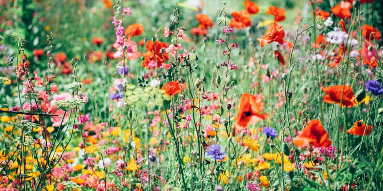 【シャイニージェル】春らしいカラーリングとニュアンスな花アート。