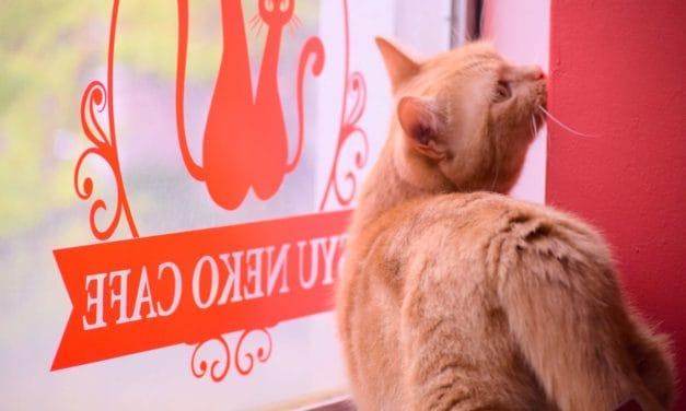 【福岡カフェ・NEW OPEN】4/11(木)短足猫専門猫カフェ「シュネコカフェ」オープン!