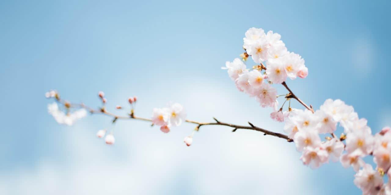 【美容室TAYAグループ】4/2(木)17:00スタート「日本を元気に! おうちでお花見プレゼントキャンペーン」
