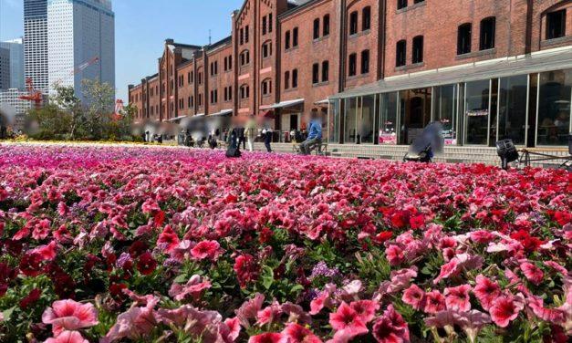 【横浜・お出かけ】フラワーガーデン2021開催中!鮮やかな花壇と食べれるお花エディブルフラワーグルメが楽しめる♪